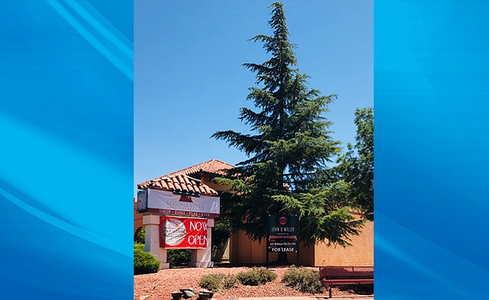 """Sedona Vista Village owner Martin A. Aronson has assured the community the large pine tree at the corner of Jacks Canyon Road and SR179 will not be cut down and """"will remain in place as we proceed with renovation of the facades of the buildings, new landscaping, perimeter half walls and new signage at the shopping center."""" Photo by Gail Simpson"""