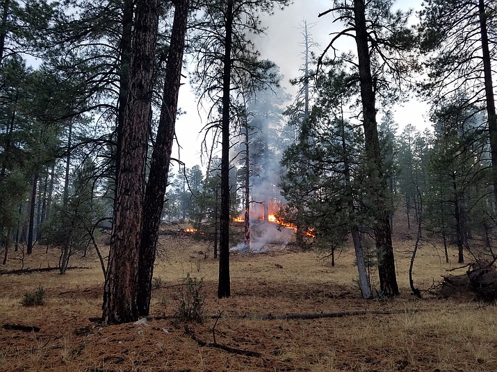 Underbrush burns in the Stubbs Fire, near Camp Wood - about 30 miles northwest of Prescott. Forest officials are thinking of letting the fire burn. (Prescott National Forest/Courtesy)