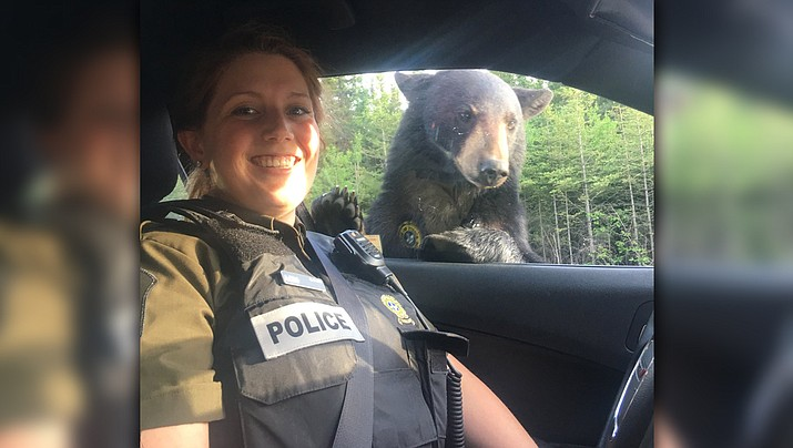 Police in the Canadian province of Quebec shared this photo on social media of a bear that had climbed onto an occupied police cruiser. (Surete du Quebec police Facebook page)