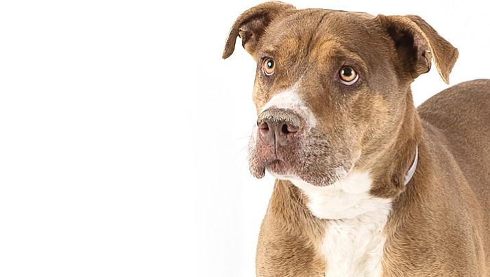 Pet Focus: Leona - Yavapai Humane Society
