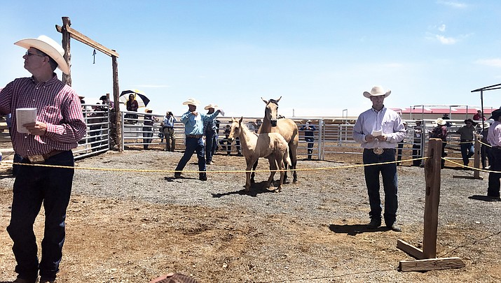 Babbitt Ranches holds annual colt sale north of Flagstaff