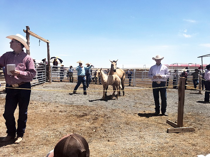 A young colt is auctioned to the highest bidder at the annual Babbitt Ranches Colt Sale held north of Flagstaff July 14. (Loretta Yerian/WGCN)