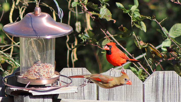 Moore: Check your seed feeders for mold