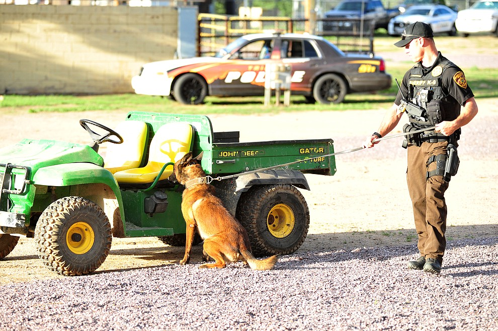 YCSO K-9 handler Steve Warburton demonstrates a drug alert with his partner as police K-9 handlers and their partners from throughout Arizona who are attending the 26th annual Canine Survival Seminar at Yavapai College hold a public demonstration at the Prescott Rodeo Grounds Tuesday, July 17, 2018.(Les Stukenberg/Courier)