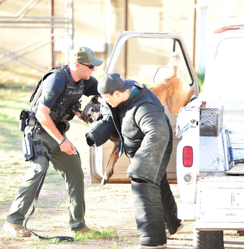 "A handler and his dog apprehend a ""suspect"" as police K-9 handlers and their partners from throughout Arizona who are attending the 26th annual Canine Survival Seminar at Yavapai College hold a public demonstration at the Prescott Rodeo Grounds Tuesday, July 17, 2018.(Les Stukenberg/Courier)"