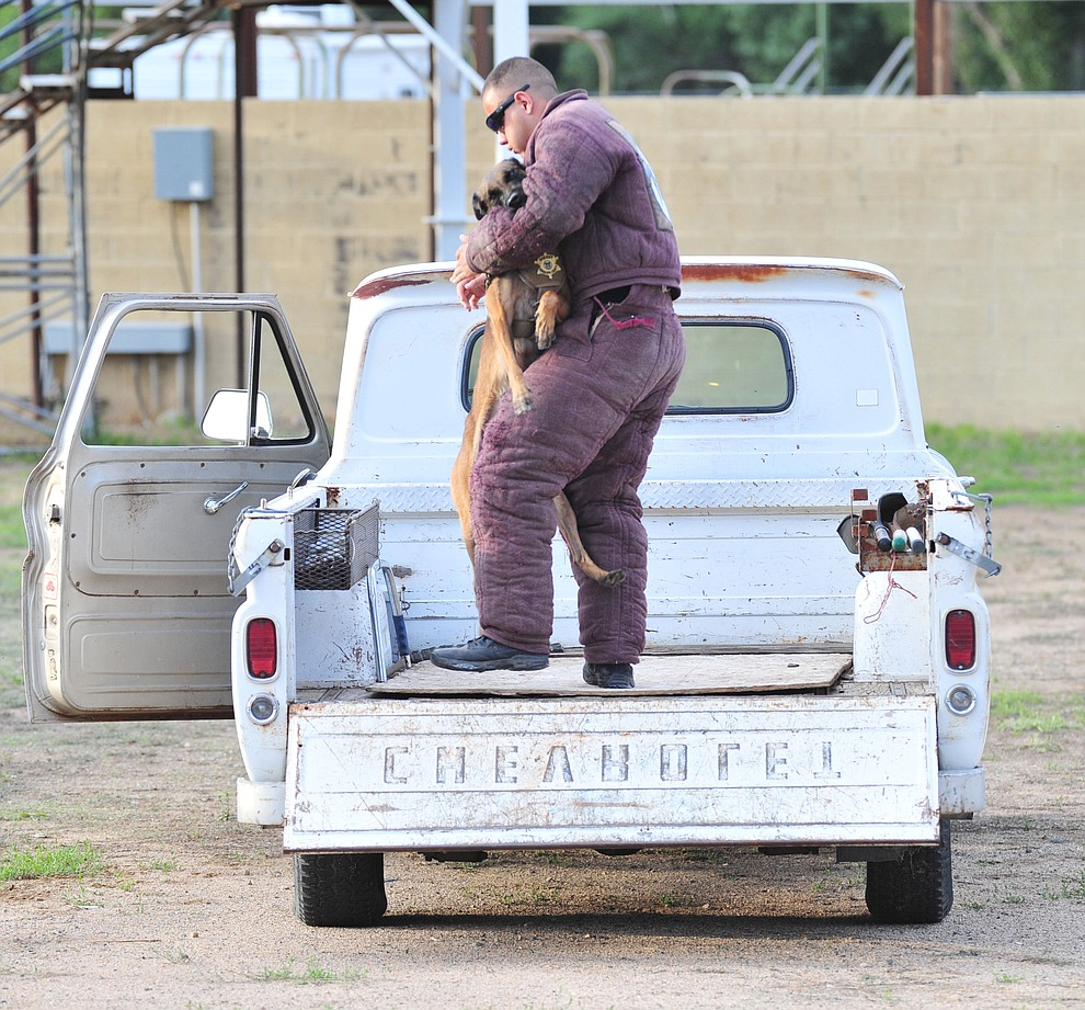 "A K-9 subdues a ""suspect"" in the back of a pickup as police K-9 handlers and their partners from throughout Arizona who are attending the 26th annual Canine Survival Seminar at Yavapai College hold a public demonstration at the Prescott Rodeo Grounds Tuesday, July 17, 2018.(Les Stukenberg/Courier)"