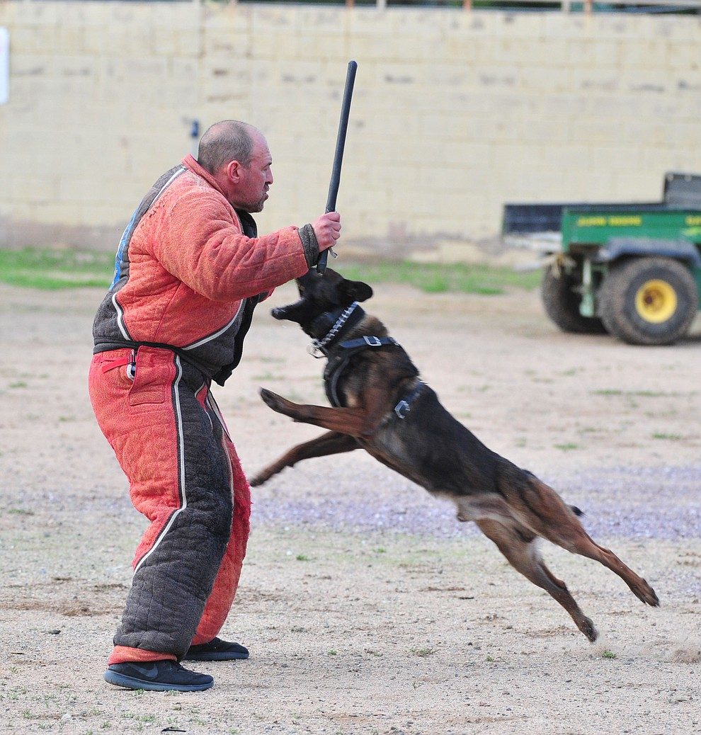 "A K-9 tries to take down a ""suspect"" as police K-9 handlers and their partners from throughout Arizona who are attending the 26th annual Canine Survival Seminar at Yavapai College hold a public demonstration at the Prescott Rodeo Grounds Tuesday, July 17, 2018.(Les Stukenberg/Courier)"