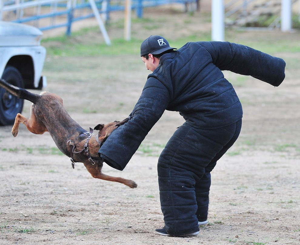 Hard Dog competition winner Quinzee from the Peoria Police Department flies through the air as police K-9 handlers and their partners from throughout Arizona who are attending the 26th annual Canine Survival Seminar at Yavapai College hold a public demonstration at the Prescott Rodeo Grounds Tuesday, July 17, 2018.(Les Stukenberg/Courier)