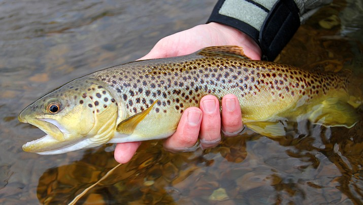 Trout fishing topic of Game and Fish Wildlife Series