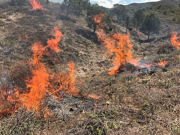 Prescribed burning on Mingus Mountain Wednesday, July 18. (Prescott National Forest/Courtesy)
