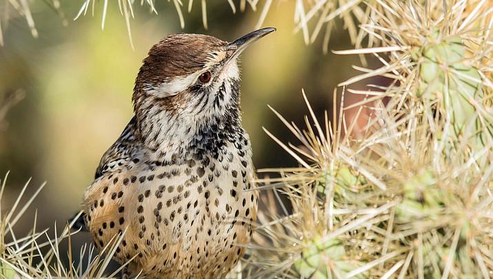AZGFD accepting entries for wildlife calendar photo contest