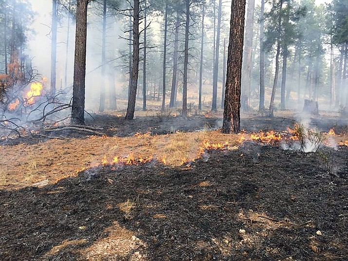 The Stubbs Fire, burning near Camp Wood, continues to clean the forest floor of needles and debris. The blaze has increased in size from 795 acres to 3,657 acres. (PNF/Courtesy)
