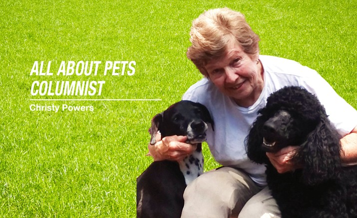 All About Pets: Christy Powers