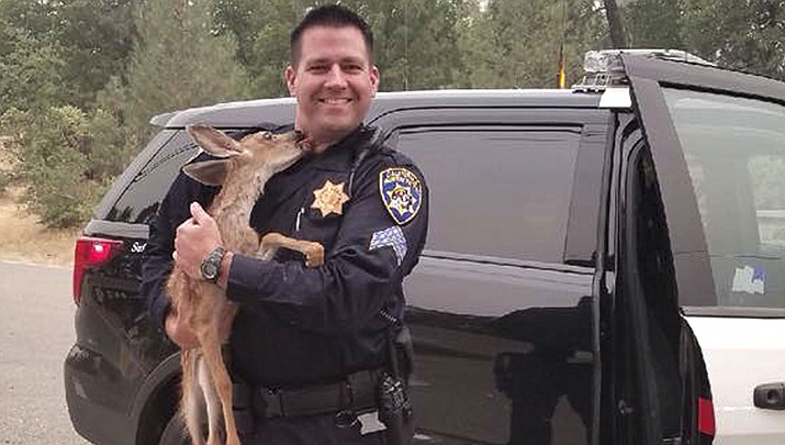 Sergeant David Fawson holds a month-old fawn that was located by Cal Fire without a mother inside the Carr Fire line near Redding, Calif. Sawson evacuated the deer to safety for care with a wildlife rescue. (California Highway Patrol)