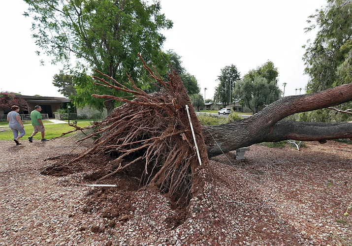 People walk around a downed tree caused by monsoon winds, Tuesday, July 31, 2018, in Sun City, Ariz. Phoenix police say traffic signals weren't working at multiple major intersections at the start of the Tuesday morning commute following a Monday night storm with strong winds that caused power outages, downed trees and damaged roofs. (Matt York/AP Photo)
