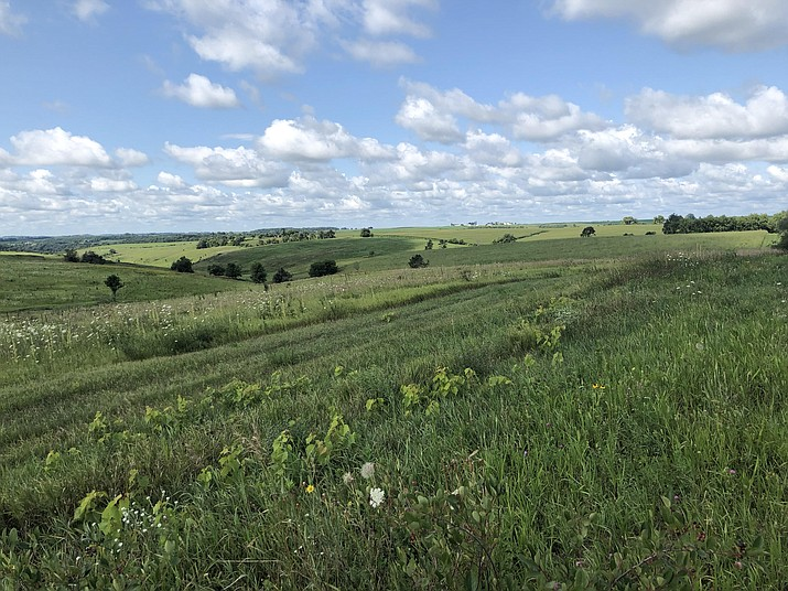 A view of the Barneveld Prairie State Natural Area in Barneveld, Wisconsin, where I added two new birds to my life list — Henslow's sparrow and sedge wren.