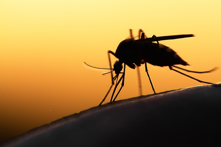 Along with much anticipated monsoons, Arizona Game and Fish is warning of the possibility of insect-borne diseases that can impact people, pets and wildlife. (Stock photo)