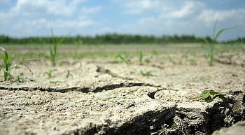 More than a heat wave ... DROUGHT photo
