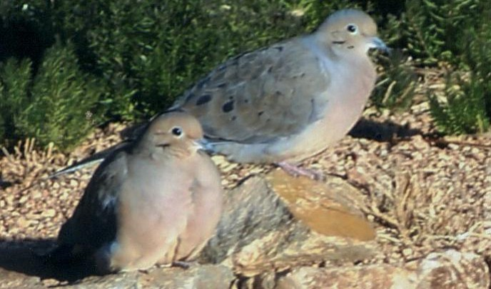 2018-2019 dove regulations available online
