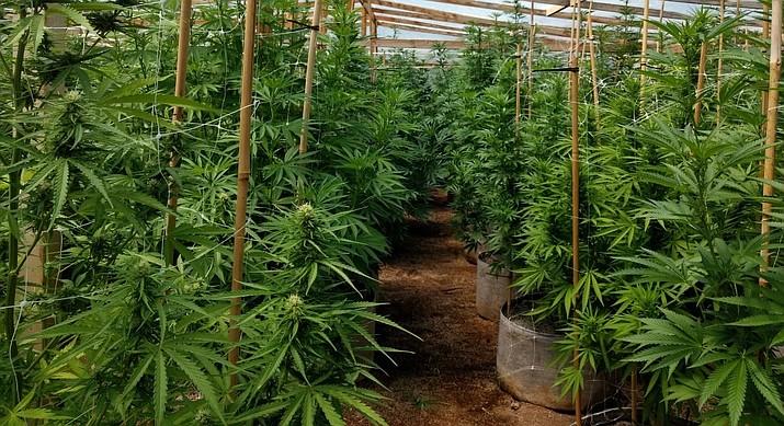 PANT seizes marijuana growing operation, butane hash oil lab | The