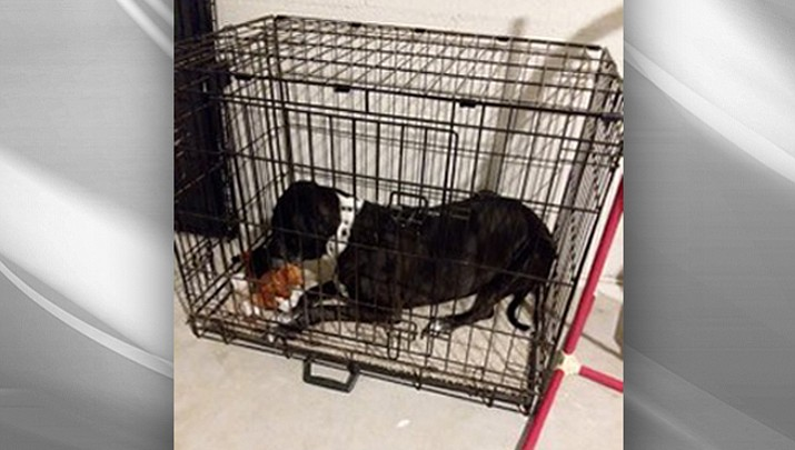 All About Pets: Importance of crate training