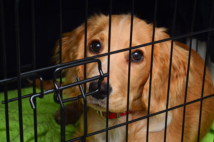 Some people cringe at the thought of putting their dog in a crate. Unfortunately, many others rely on them to confine their pups for extended periods of time. Crates are a wonderful tool if used correctly. (Stock file photo)