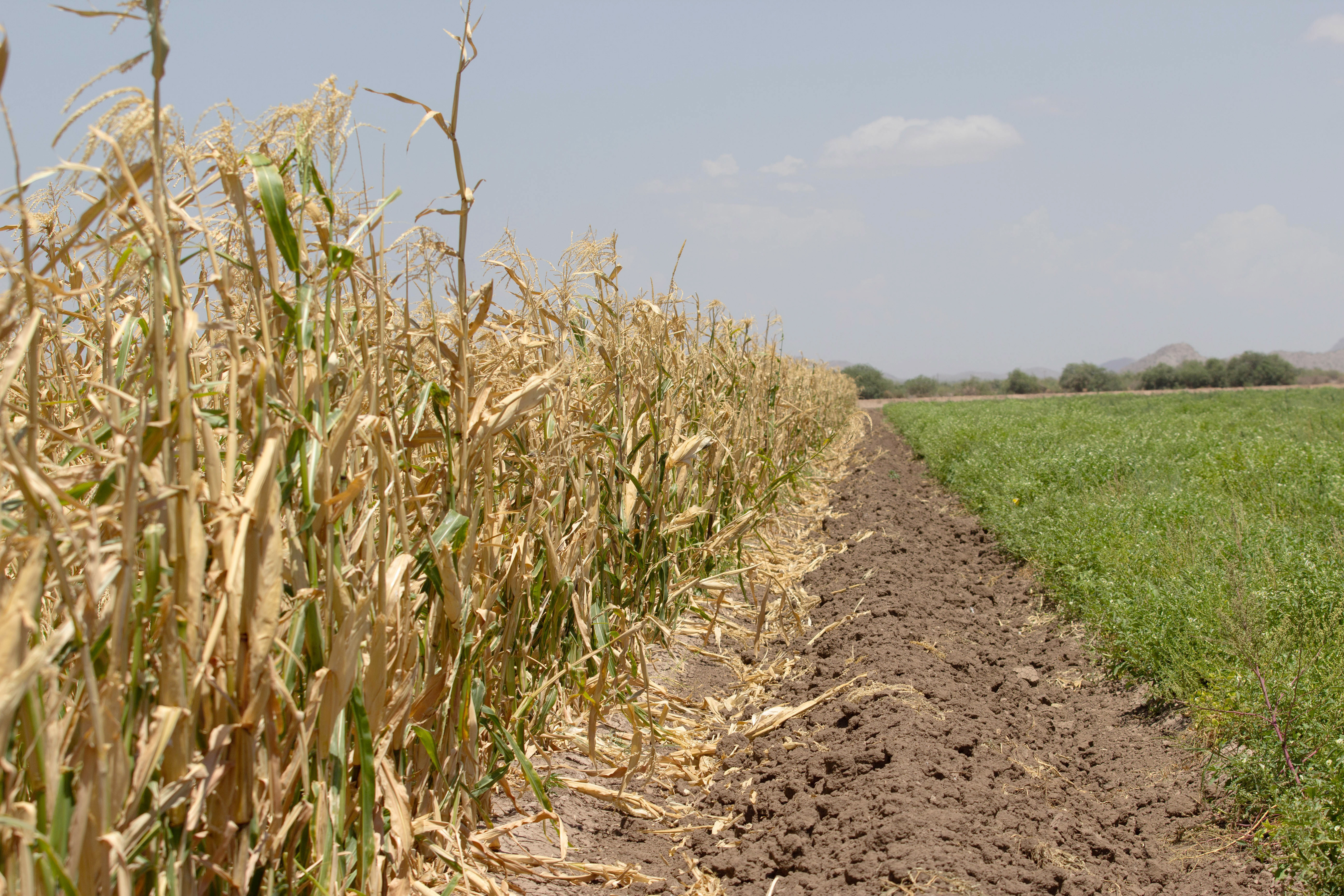 Native American farmers plan moves to global market ...