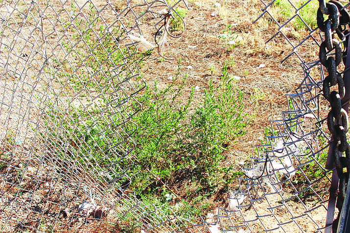 Western Arizona Humane Society found a hole in its fence on the east side of the property Thursday morning and discovered two dogs missing. (Photo by Vanessa Espinoza/Daily Miner)