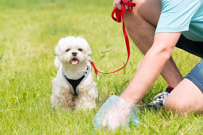 """Doggie DNA"" as an option when residents began complaining about unscooped poop. (Stock photo)"