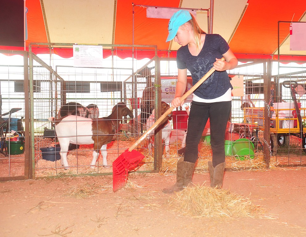 Haley Shea from the Chino Valley Breakaway Latigos 4-H club cleans up the stock area at the 69th annual Yavapai County 4-H/FFA Expo Show and Auction Saturday, August 25, 2018 at the Prescott Rodeo Grounds. (Les Stukenberg/Courier)