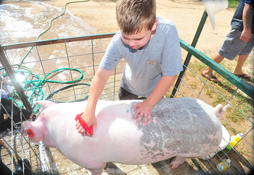 Paulden's Jacob Vigueria of the Chino Valley Breakaway Latigos gives his market pig Bad Hombre a bath at the 69th annual Yavapai County 4-H/FFA Expo Show and Auction Saturday, August 25, 2018 at the Prescott Rodeo Grounds. (Les Stukenberg/Courier)