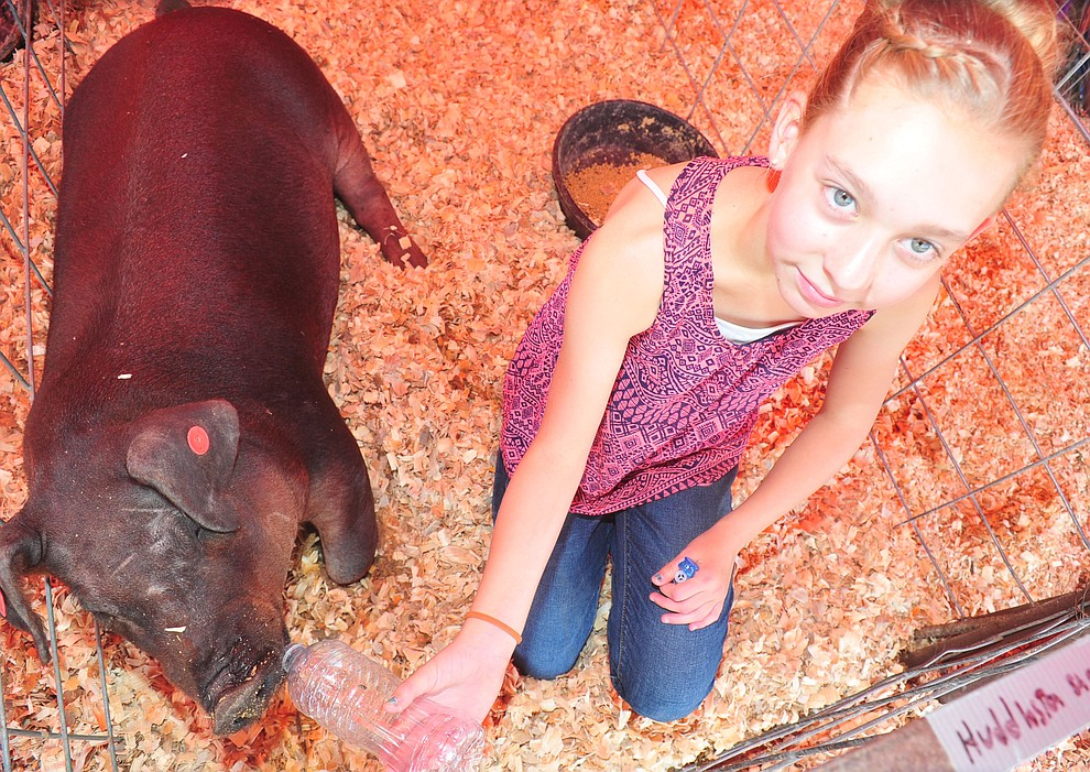 Prescott Shamrock Hustler's Kadence Huddleston gives her market pig Rosebud a drink at the 69th annual Yavapai County 4-H/FFA Expo Show and Auction Saturday, August 25, 2018 at the Prescott Rodeo Grounds. (Les Stukenberg/Courier)