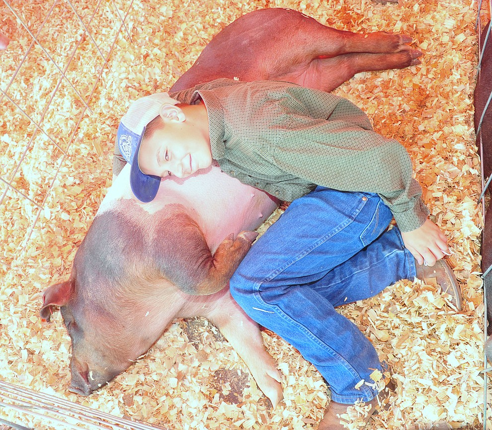 Prescott Shamrock Hustler's Easten Huddleston lays down with hsi market pig Bucky at the 69th annual Yavapai County 4-H/FFA Expo Show and Auction Saturday, August 25, 2018 at the Prescott Rodeo Grounds. (Les Stukenberg/Courier)
