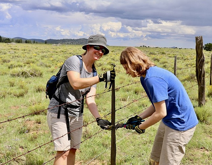 Volunteers work to modify fence on the Kaibab National Forest in order to allow for pronghorn movement and prevent habitat fragmentation. (Photo courtesy of Arizona Antelope Foundation)