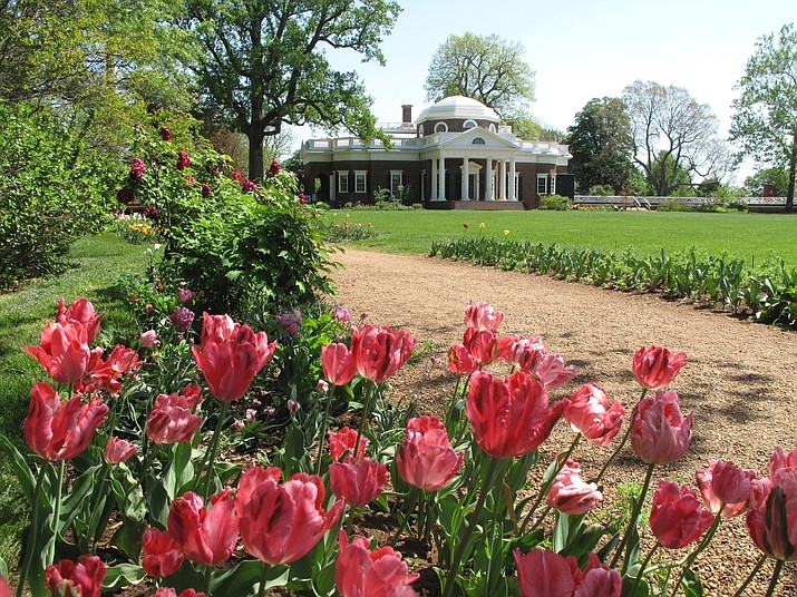 This April 19, 2010 photo shows tulips blooming at Thomas Jefferson's Monticello near Charlottesville, Va. Timing is important when planting spring-blooming bulbs in the autumn. They need a chance to take root. Bulbs bloom best in spring when planted in autumn soils that have cooled to at least 55 degrees. The more chilling they get, the better the quality of the bloom and the longer their stem length. Refrigerate the bulbs for a time before planting if you live in the South. (Dean Fosdick via AP)