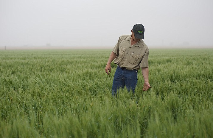 Farmer Bryan Kuchler checks out his wheat crop in this U.S. Department of Agriculture file photo. China said it is ready to impose retaliatory tariffs on $60 billion worth of U.S. goods if further sanctions are put upon its exports to the U.S. (USDA photo)