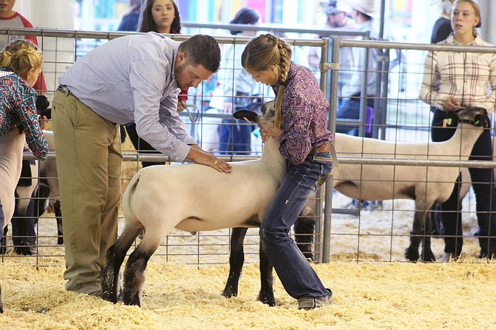 Rebecca Westlake shows her lamb at the Coconino County Fair Aug. 31. (Photo/Riley Drye)