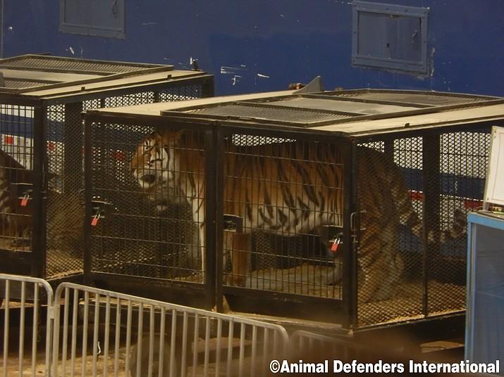 (Photo courtesy of Animal Defenders International)
