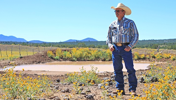 Cattle mutilations baffle Williams rancher