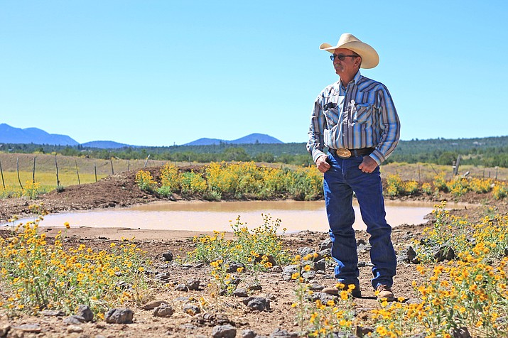 John Mahan looks out over his ranch north of Williams. Mahan found two of his cattle dead under suspicious circumstances Sept. 10.  (Wendy Howell/WGCN)