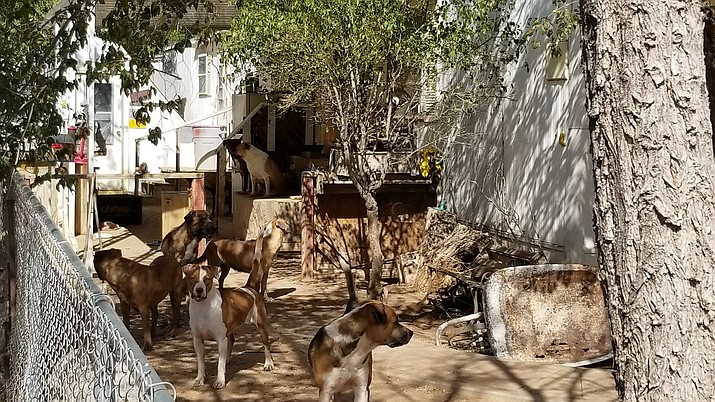 Mohave County Sheriff's Office Animal Control officers removed 17 dogs from a residence and taken to Western Animal Humane Society Monday. (Photo courtesy of MCSO)