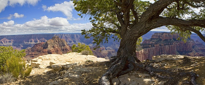 Seasonal shutdown will begin Oct. 16 at the Grand Canyon's North Rim. Tourism officials have begun to push for an extended season at North Rim facilities. (NPS photo by W. Tyson Joye)