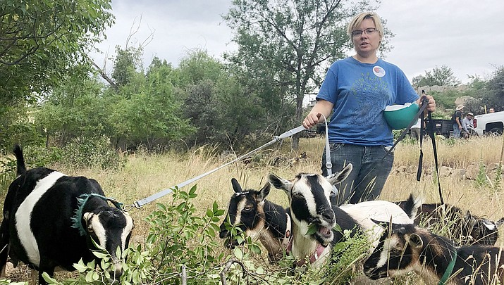 Goats assist with  weed abatement