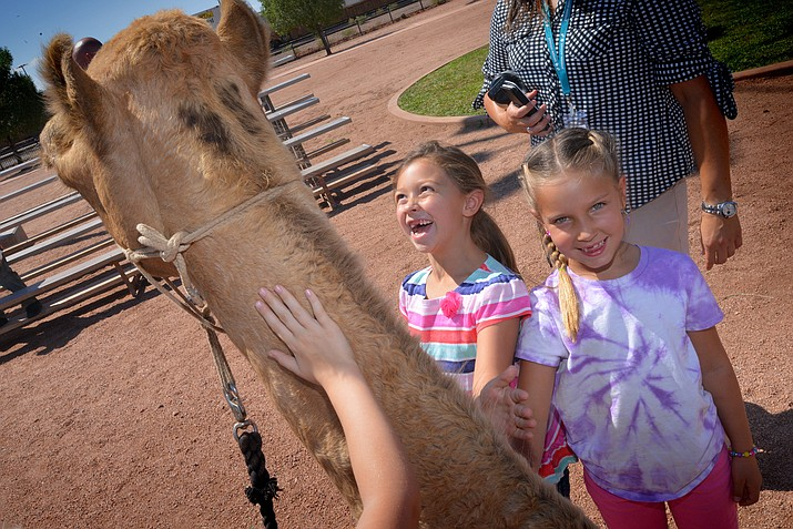 Children enjoy petting and visiting camels during a recent visit by the Texas Camel Corp to Winslow. (Todd Roth/NHO)
