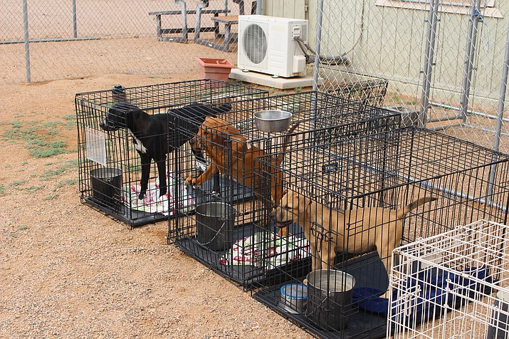 Dogs are shown in their cages at the Mohave County animal shelter at 950 Buchanan St. The shelter will bring a few dogs to the Brats and Brews Oktoberfest Saturday at Metcalfe Park. (Photo by Hubble Ray Smith/Daily Miner)