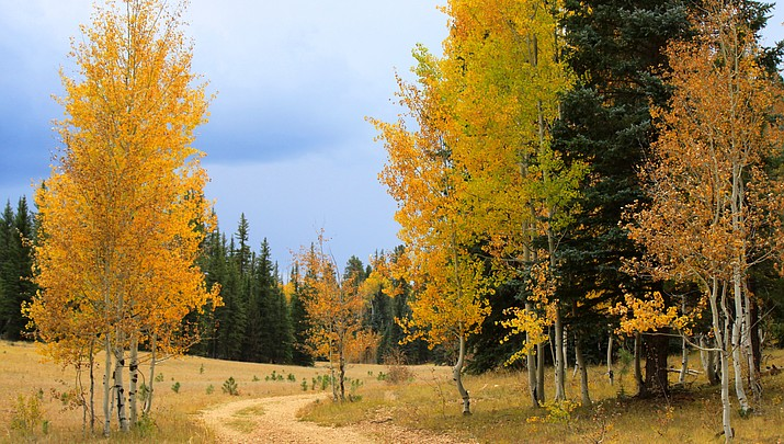 Finding fall in northern Arizona