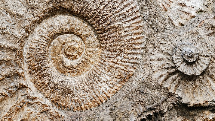 Grand Canyon National Park to celebrate National Fossil Day Oct. 17
