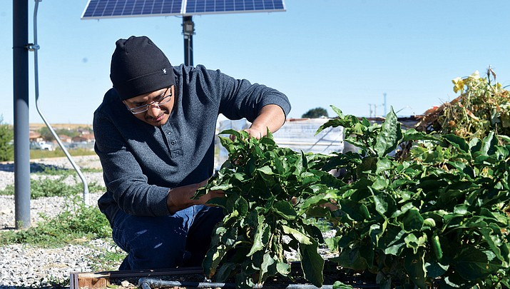 Navajo Tech land grant workshops seek to restore gardening on rez