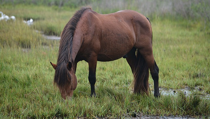 Parks in Brief:  Rocky Mountain National Park, Assateague Island National Seashore