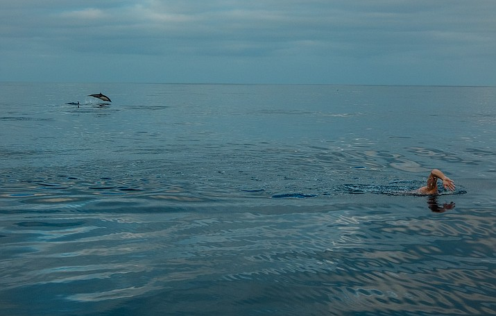 Loeffler is joined by dolphins while completing his swim. (Courtesy)